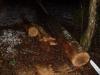 Podrto drevo, 17.02.2011